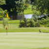 A view of a hole and a duck family at Portlethen Golf Club